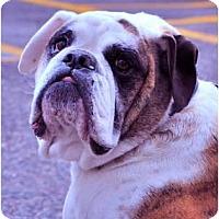 Adopt A Pet :: Doug*adoption pending* - Gilbert, AZ