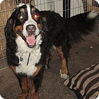 Adopt A Pet :: URGENT SAMMY - Cornwall, ON