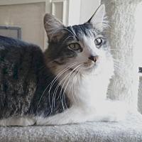 Adopt A Pet :: Homer - Alameda, CA