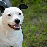 Adopt A Pet :: Panda - Tomball, TX