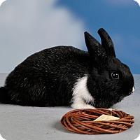 Adopt A Pet :: Bryce - Marietta, GA