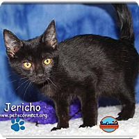 Adopt A Pet :: Jericho - South Bend, IN