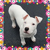 Adopt A Pet :: Lucy - Winsted, CT
