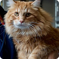 Adopt A Pet :: Joey - Vancouver, BC
