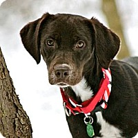 Adopt A Pet :: Liza - Hastings, NY