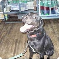 Adopt A Pet :: Bryson - Albany, NY