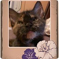 Adopt A Pet :: Nitra - Audubon, NJ