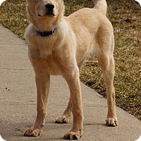 Adopt A Pet :: Mila - Lewisville, IN
