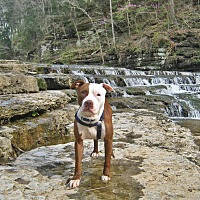Adopt A Pet :: Rebel - Gainesboro, TN