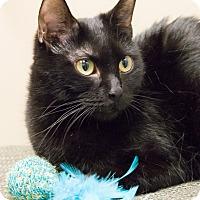 Adopt A Pet :: Lucia - Chicago, IL