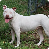 Adopt A Pet :: Molly - Burbank, OH