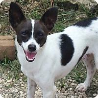 Adopt A Pet :: Herby K - Shreveport, LA