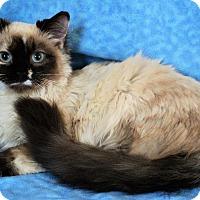 Adopt A Pet :: Isabelle - Greensboro, NC