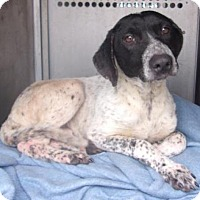 Adopt A Pet :: Vespa - Austin, TX