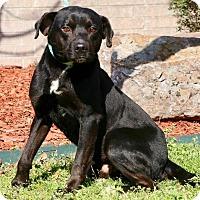 Adopt A Pet :: Derek - Little Rock, AR