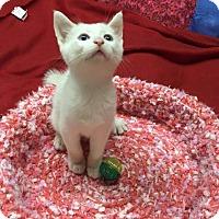 Adopt A Pet :: Sparky - Butner, NC