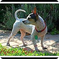 Adopt A Pet :: Ritchie Rich - Orange, CA