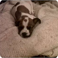 Adopt A Pet :: Buddha - Phoenix, AZ