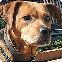 Adopt A Pet :: Wiggles - Kingwood, TX