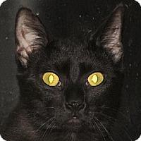 Adopt A Pet :: Tootsie - Walden, NY