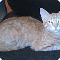 Adopt A Pet :: K-Sasha1-Charlotte - Colorado Springs, CO