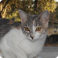 Adopt A Pet :: Bunni - North Highlands, CA