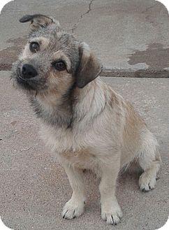Terrier (Unknown Type, Small) Mix Dog for adoption in Manhattan, Kansas - Bo