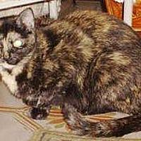 Adopt A Pet :: Debbie - Miami, FL