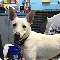 Adopt A Pet :: Addison - Austin, TX