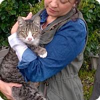 Adopt A Pet :: Chili - Yuba City, CA