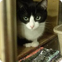 Adopt A Pet :: Cocoa - Northfield, OH