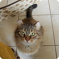 Adopt A Pet :: Sunni - Minot, ND