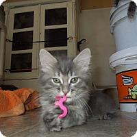 Adopt A Pet :: Humphrey - Mission Viejo, CA
