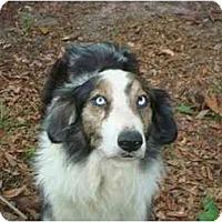 Adopt A Pet :: Keifer - Orlando, FL
