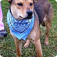 Adopt A Pet :: BEETHOVEN - Bluff city, TN