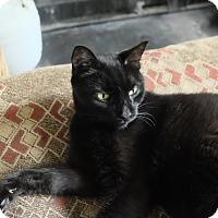 Adopt A Pet :: Orkney - Alexandria, VA