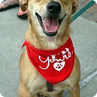 Adopt A Pet :: Forrest - Baton Rouge, LA