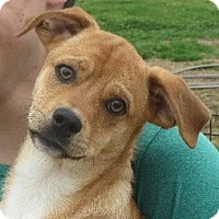Adopt A Pet :: Clinton - Greenville, RI