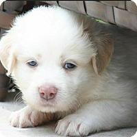 Adopt A Pet :: Daffodil - Austin, TX