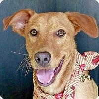 Adopt A Pet :: Luke/Lucas - Baton Rouge, LA