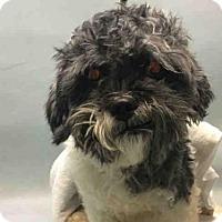 Adopt A Pet :: Cyan n/k/a Charlie - Ridgefield, CT