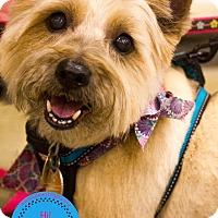 Adopt A Pet :: Murphy - Staten Island, NY