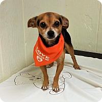 Adopt A Pet :: Papi - Tavares, FL