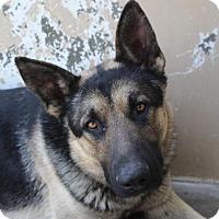 Adopt A Pet :: BRUNO - Red Bluff, CA