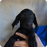 Adopt A Pet :: Luna - Oviedo, FL