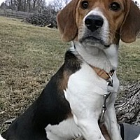 Adopt A Pet :: Sniffy - Indianapolis, IN