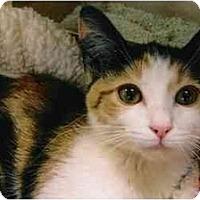 Adopt A Pet :: Tessa - Brea, CA