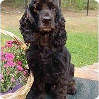 Adopt A Pet :: Cole - Sugarland, TX