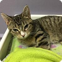Adopt A Pet :: Jasmine - Medina, OH