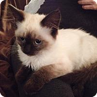 Adopt A Pet :: TartB - North Highlands, CA